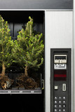 pine trees in a vending machine
