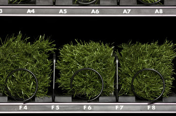 grass in a vending machine