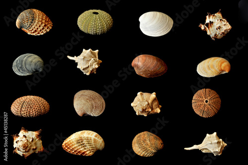different seashells