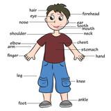 Fototapety Cartoon child. Vocabulary of body parts. Vector illustration.