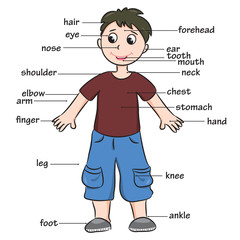 Cartoon child. Vocabulary of body parts. Vector illustration.