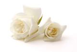 Rose - 45146481