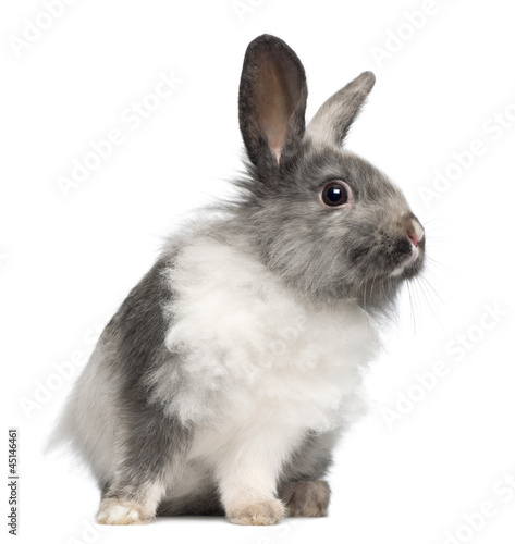 Rabbit sitting against white background