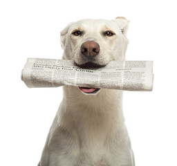 Portrait of Crossbreed dog holding newspaper in its mouth