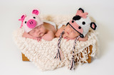Fraternal twin newborn baby girls wearing pig and cow hats