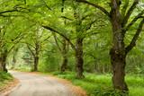 Green nature path