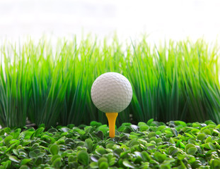 golf ball  on tee and green grass field
