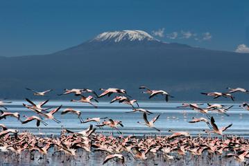 Uccelli con il Kilimangiaro