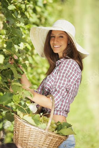Harvesting the grape - 45167033