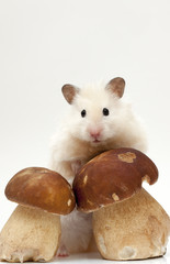 Hamster and fungi