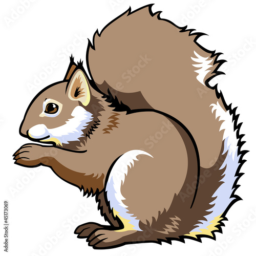 sitting squirrel on white
