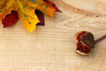 kastanie mit ahornblatt