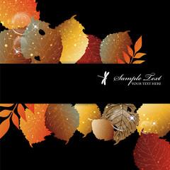 fallen leaves background