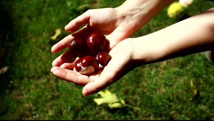 Handful of conkers with blurred green background
