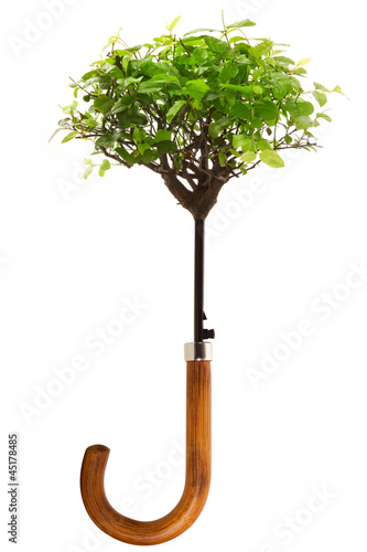 ombrello bonsai