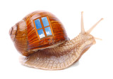 Funny snail with his mobil home.