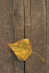 Autumn background of leaf over wooden surface