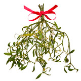 Sprig of Mistletoe isolated