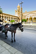 Horse and Cathedral in Palermo