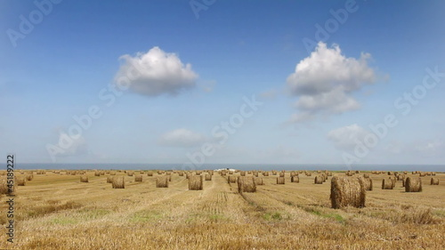 wheat field 01