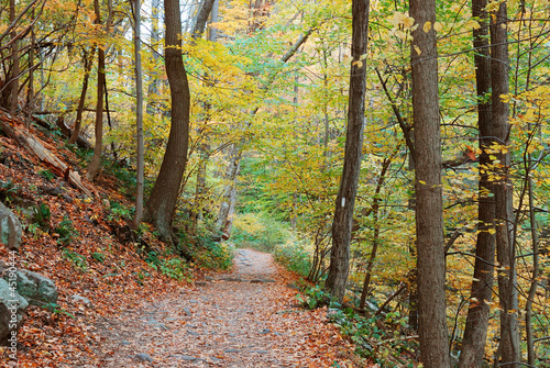 hiking trail