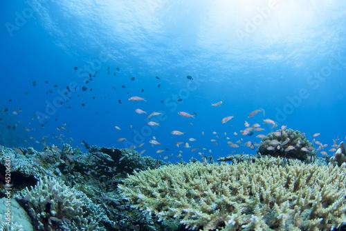 Leinwanddruck Bild サンゴと太陽と小魚の群れ
