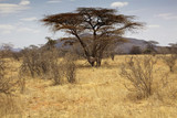 landscape of the savannah in Kenya