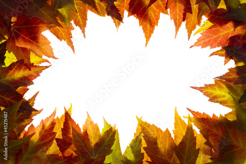 Fall Maple Leaves Border on White