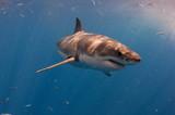Fototapete Unterwasser - Blau - Fische