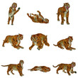 Set of tiger poses