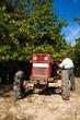 Senior farmer and his tractor