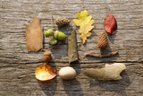 leafes, acorns, barks, cones, stone on wood background