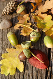 leafes, acorns, barks, cones on wood background