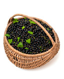 basket with black currant
