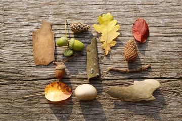 leafes, acorns, barks, cones, stone on wood background