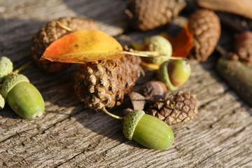 leafes, acorns, barks, cones on wood background