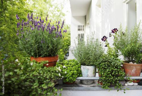 Fotobehang Tuin balkonpflanzen