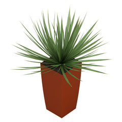 Dracena houseplant in a tall container