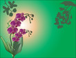 dark pink orchid flowers on green background