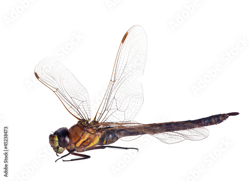large yellow dragonfly isolated on white