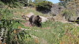 Brown Bear Goes For A Walk