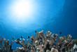 サンゴと太陽と小魚