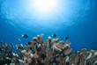 青い海と太陽とサンゴと小魚