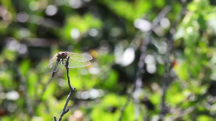 A damselfly on a steam in the wild.