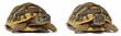 Leinwandbild Motiv Turtles Tortoise