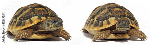 Foto op Canvas Schildpad Turtles Tortoise