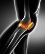 Meniscus and knee cartilage anatomy