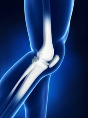 Knee bone anatomy