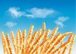 Ears of wheat in front of blue sky. Vector.