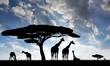 giraffe over sunrise